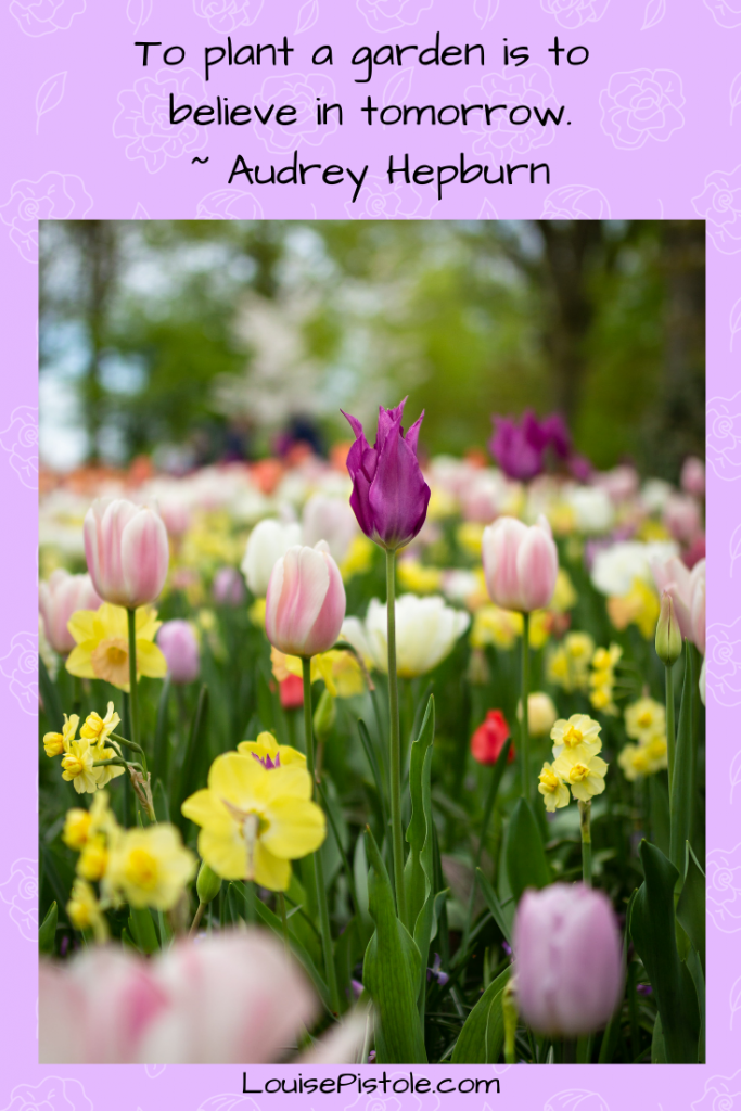 A garden of spring flowers - tulips and daffodils. To plant a garden is to believe in tomorrow.