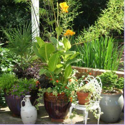 Where flowers bloom, so does hope. ~Lady Bird Johnson