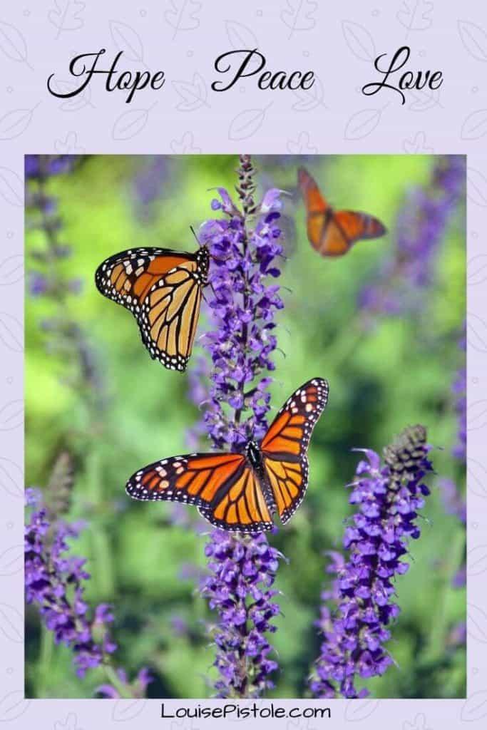 Purple flowers with orange butterflies. Hope Peace Love