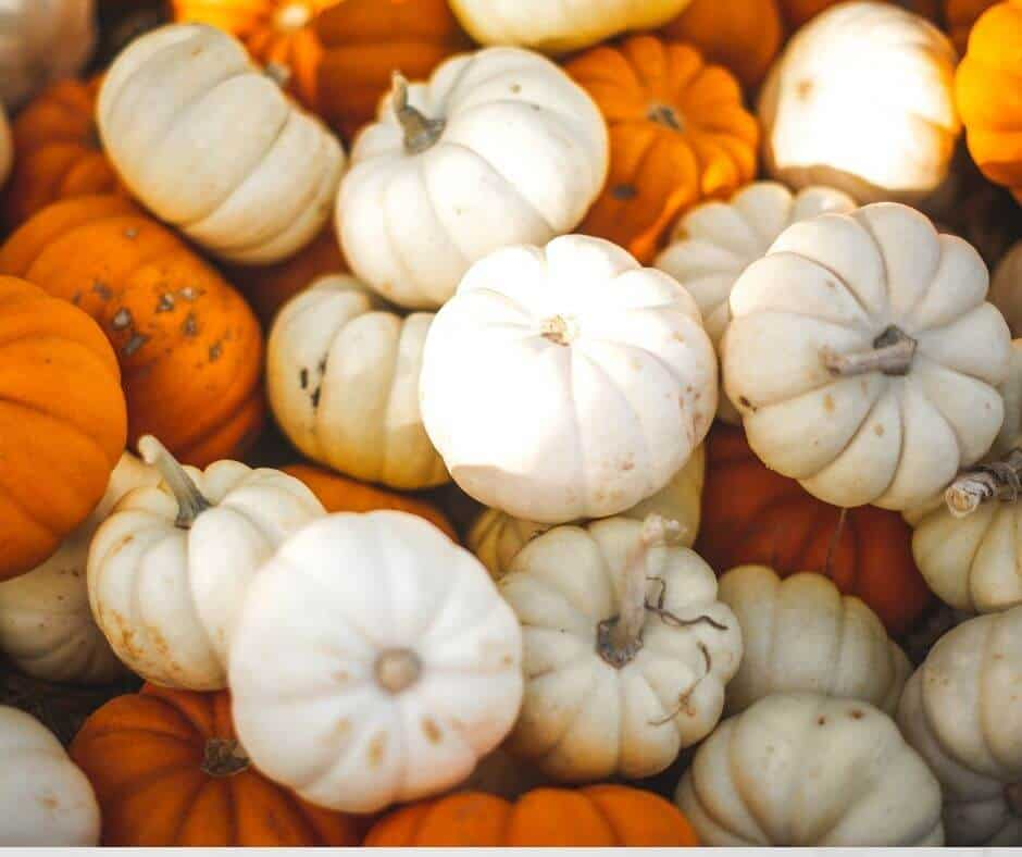 Pumpkins for fall