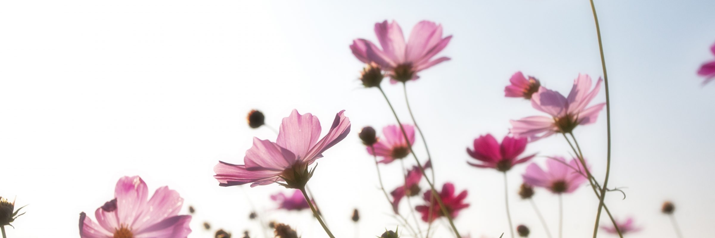 flowers-1476517