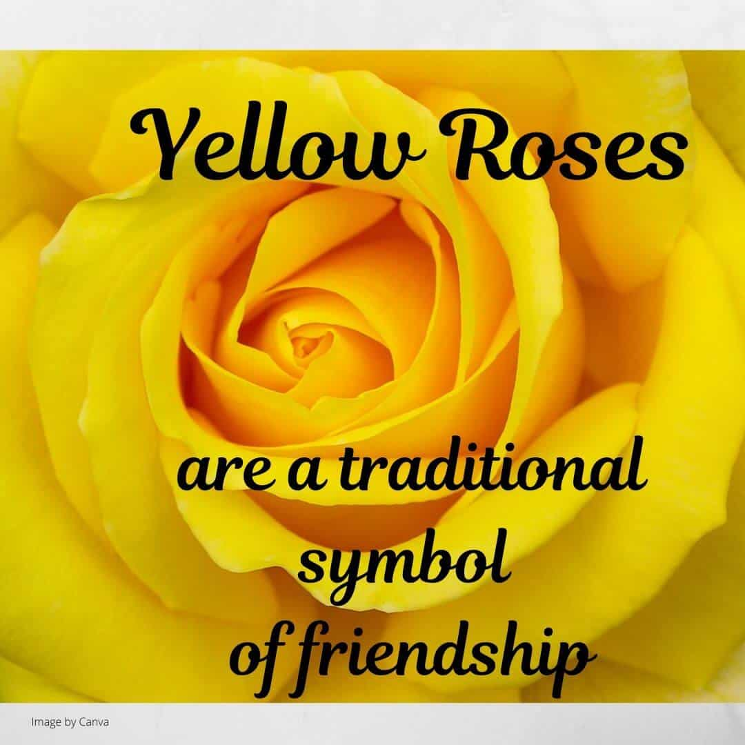 Yellow roses are a traditional symbol of freiendhip